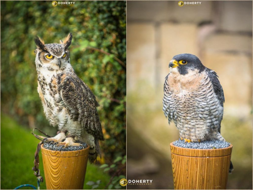 Owls at Coombe Abbey Hotel Wedding