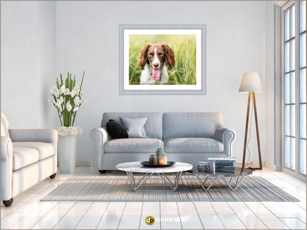 Dog portraits in Coventry