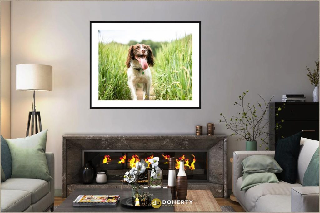 Dog Portraits - Pet Photographer Coventry