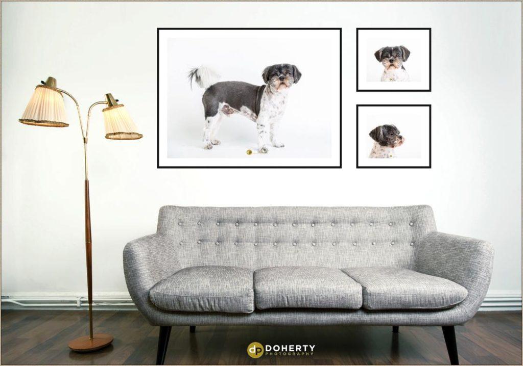 Dog portraits in Birmingham